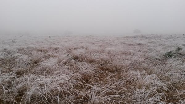 winterlandschap NP Veluwezoom
